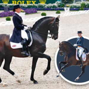 Embryo auction horse Diamond Hit Jazz